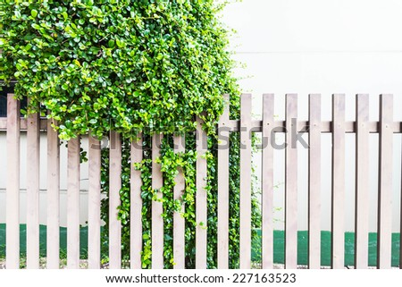 Fence in the garden