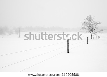 Fence Leading to Tree on Snowy Day - stock photo