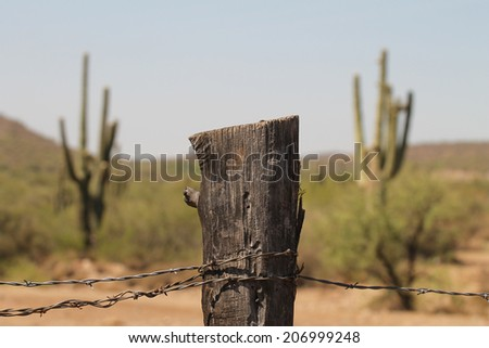 Fence post and barbed wire with giant cactus in background