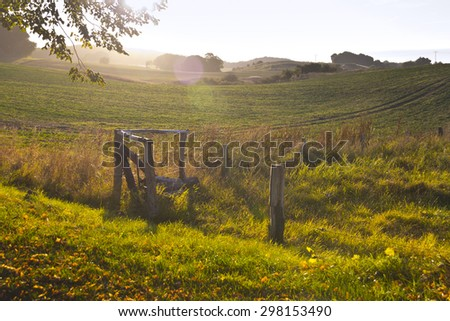 Fence, tree and meadow, blurred by selective focus on weeds green plant on foreground, at the bottom of the image, shot with copy space for design. - stock photo
