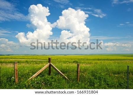 Fence with canola field in the background in summer - stock photo