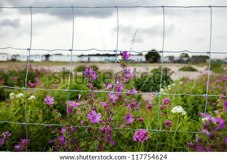 Fence with flowers and caravan or camp site in background. Barren landscape in England Sussex. - stock photo
