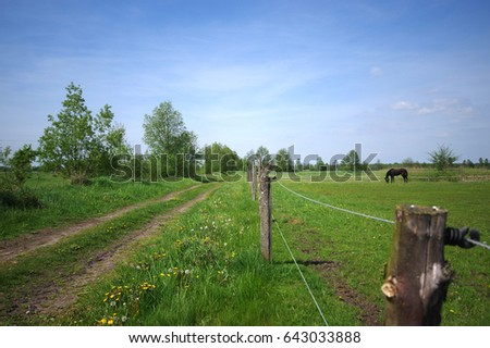 Fenced green pastiche with a horse eating grass. Blue sky on background.