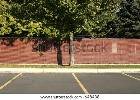 Fenced Tree in a Parking Lot