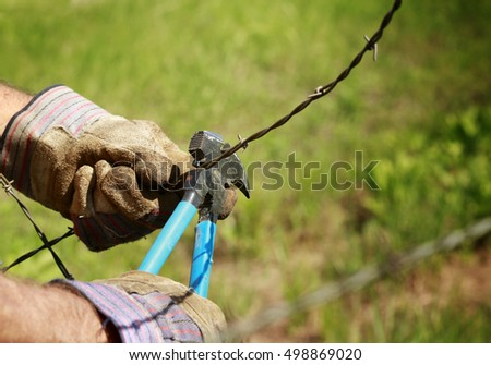 Fencing: Man cutting old barb wire farm fence with hand fencing tool