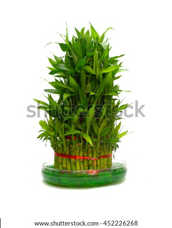 feng shui plant