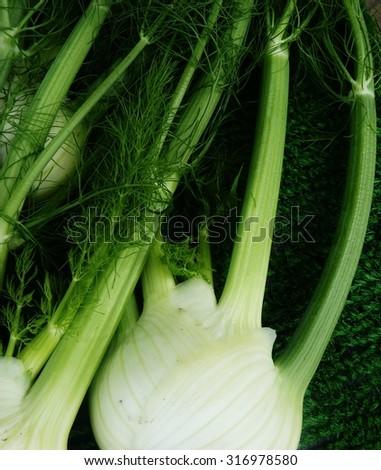 fennel on green felt background - stock photo