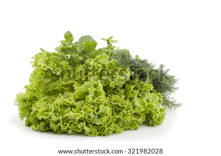 fennel salad mint leaves on a white background - stock photo