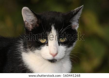Feral Cat in the Wild Hoping and Waiting to be Fed - stock photo