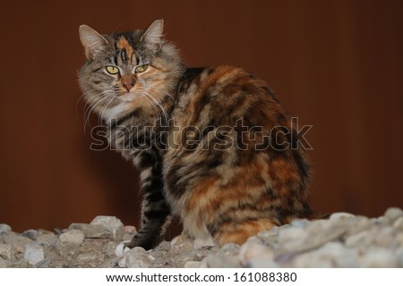 Feral Cats, with third eyelid (Nictitating Membrane) Showing, While Hoping and Waiting to be Fed. - stock photo
