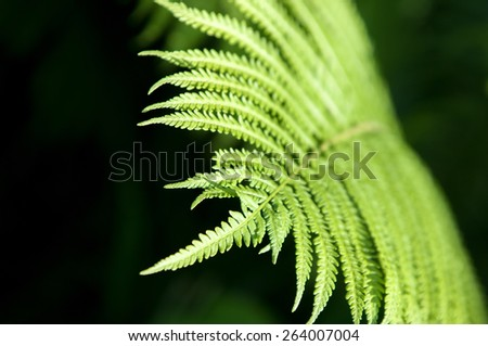 fern, brake. a flowerless plant that has feathery or leafy fronds and reproduces by spores released from the undersides of the fronds. - stock photo