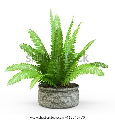 Fern bush in a pot isolated on white background. 3D Rendering, 3D Illustration.