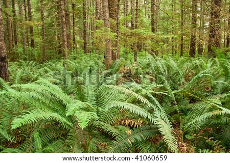 fern forest - stock photo