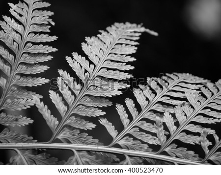 Fern frond closeup monochrome black and white shallow depth of field - stock photo