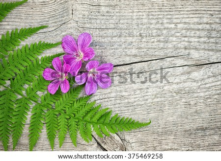 Fern green leaf and violet flowers on the old wooden background - stock photo