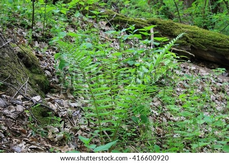 Fern in forest - stock photo