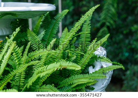 Fern in the waterfall blow for decoration garden.