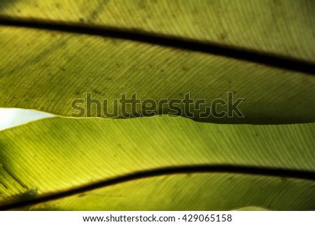fern leaf close-up on blurred dark green natural background