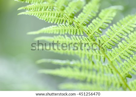 Fern leaf. Fern leaves foliage in the forest - stock photo