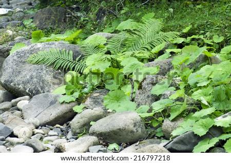 Mountain waterfall green ferns moss plants stock photos illustrations