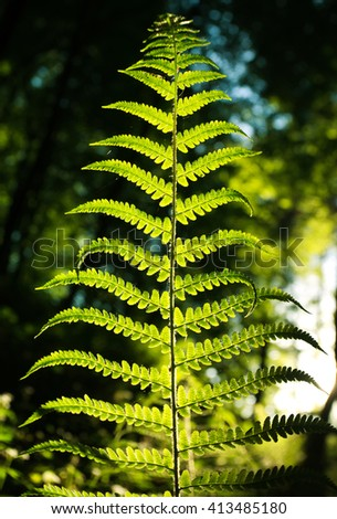 Fern leaf in forest on a background of green woods in the sunlight  - stock photo
