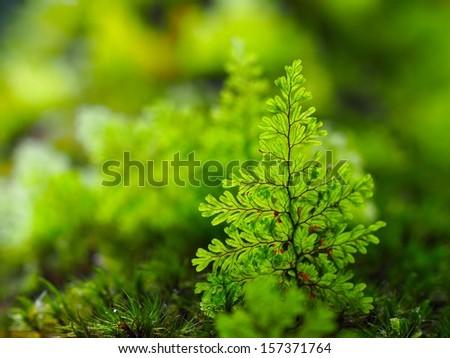 Fern leaf on a tree - stock photo