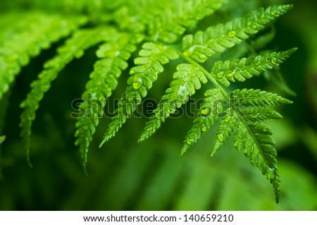 Fern leaf with water drops close-up - stock photo