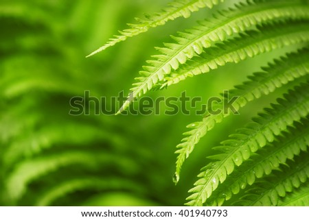 fern leaves, green natural background, selective focus