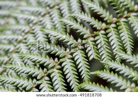 fern leaves on natural background