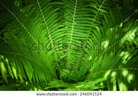 Fern leaves, the close up - stock photo