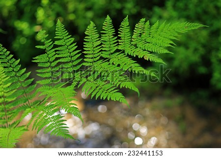 fern on the background of the creek