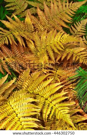 Fern, one of the earths oldest plant species. - stock photo