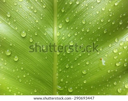 Fern pattern background