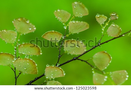 Fern plants cover the ground of the natural forest. - stock photo