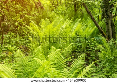 Fern plants cover the ground of the natural forest - stock photo