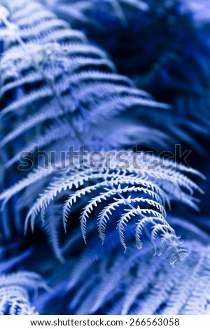 Fern plants in the woods - toned image - stock photo