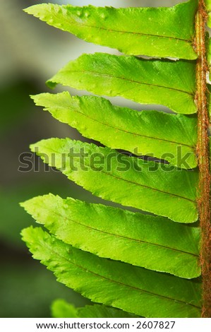 Fern's frond macro closeup. Extremely shallow DOF.