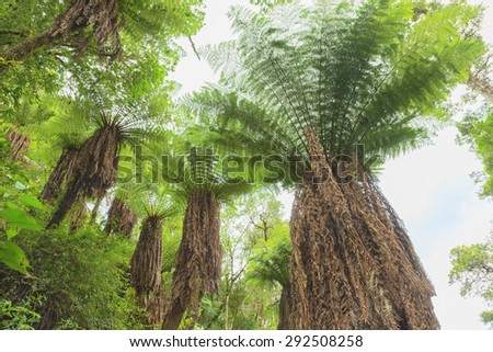 Fern tree in the tropical rainforest - stock photo