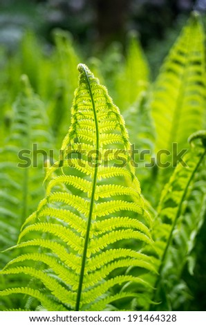 Ferns - stock photo