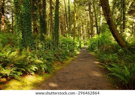 Ferns along a coastal forest trail, Otter Crest, Oregon Coast - stock photo