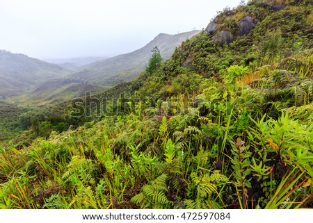 Ferns and other plants in the mountains on a misty morning in Africa, Madagascar