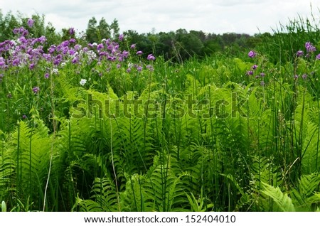 Ferns and wildflowers in a rural Michigan meadow - stock photo