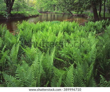 Ferns fill the banks of the Pere Marquette National Scenic River in Lake County, Michigan.