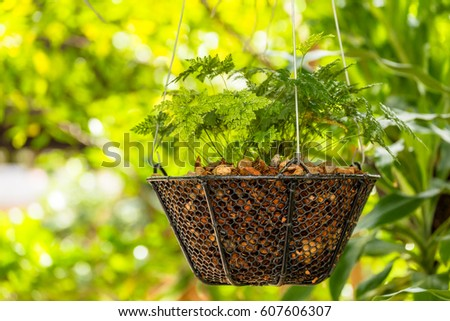 Ferns in basket hanging in garden.