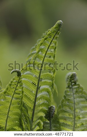 Ferns in Shakespeare Garden in Spring in New York's Central Park