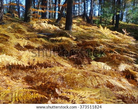 Ferns in the autumn forest in Bohemian paradise, Czech republic - stock photo