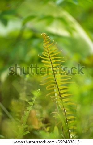 Ferns in the jungle. Selective focusing and shallow depth of field.