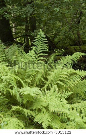 Ferns in the natural forest just after rain