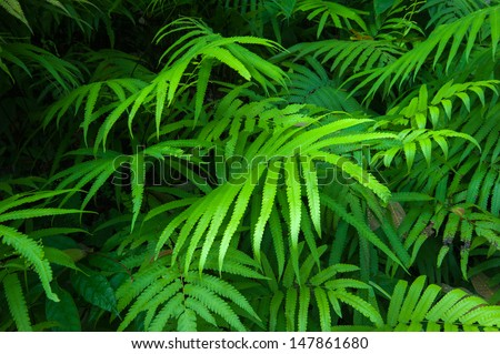 Ferns leaves green foliage tropical background. Rain forest jungle plants natural flora - stock photo