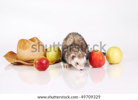 Ferret and crop of apples - stock photo